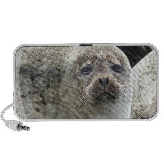 White Leopard Seals Speakers