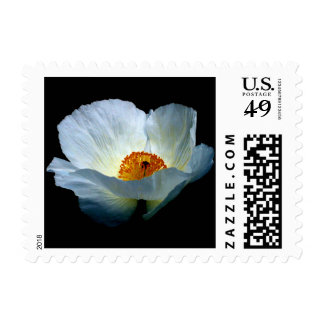 White Light Blooming Postage