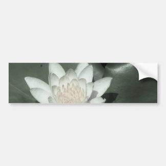 white light  pink lotus water lily flower bumper sticker