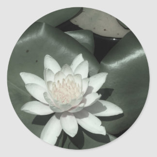 white light  pink lotus water lily flower classic round sticker
