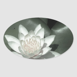 white light pink lotus water lily flower oval stickers