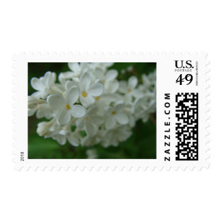White Lilac Postage Stamp