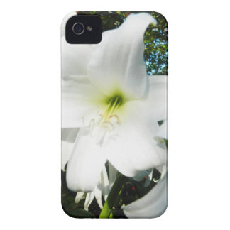 White Lilies Blackberry Bold Case