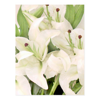 White Lilies,Lilies of love_ Postcard