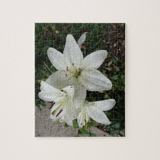 White Lilly Jigsaw Puzzles