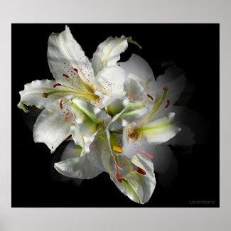 White Lily Fantasy print