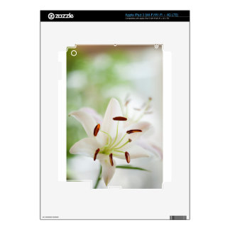 White Lily Flower Fully Open iPad 3 Skin