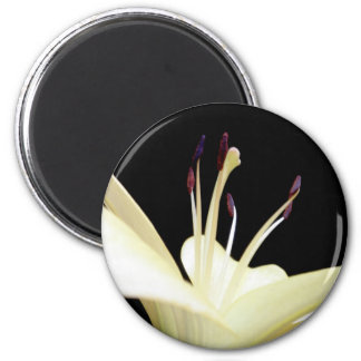 White Lily Flower Lilies Flowers Photo Magnet