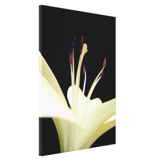 White Lily Flower Lilies Wrapped Canvas Print