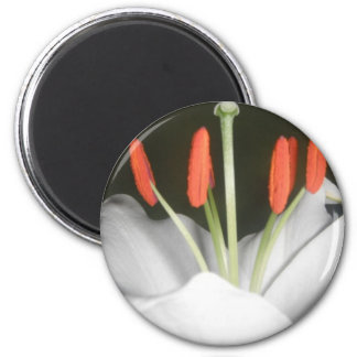 White Lily Magnet