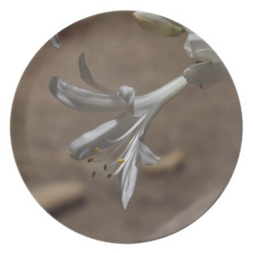 White Lily of the Nile Plate