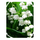 White Lily Of The Valley Postcard at Zazzle