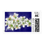 White lily on dark blue sky background  Postage
