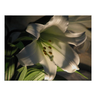 White Lily Poster 1
