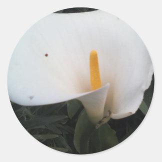 White Lily Round Sticker