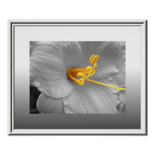 White Lily Selective Color Poster/ Canvas Print