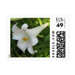 White Lily Stamp