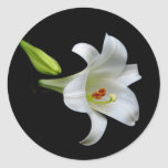 White Lily Stickers