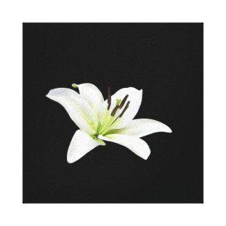 White Lily Stretched Canvas Print