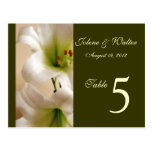 White Lily Table Number Card Post Card