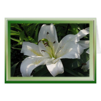 White Lily With Decorative Border Card