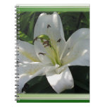 White Lily With Decorative Border Notebooks