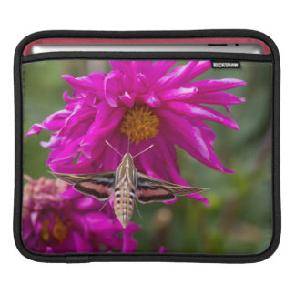 White-lined sphinx moth feeds on flower nectar 2 iPad sleeve