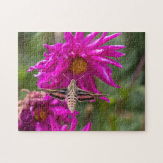 White-lined sphinx moth feeds on flower nectar 2 jigsaw puzzle