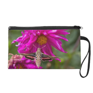 White-lined sphinx moth feeds on flower nectar 2 wristlet clutch