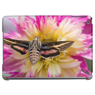 White-lined sphinx moth feeds on flower nectar cover for iPad air