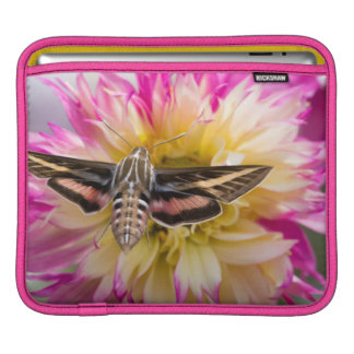 White-lined sphinx moth feeds on flower nectar iPad sleeves