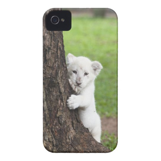White lion cub hiding behind a tree. iPhone 4 Case-Mate case