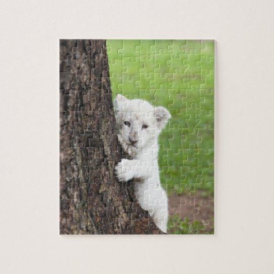 White lion cub hiding behind a tree. jigsaw puzzle