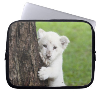 White lion cub hiding behind a tree. laptop computer sleeves