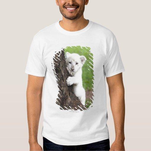 White lion cub hiding behind a tree. tshirt