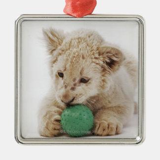 White lion cub (Panthera leo krugeri) playing Square Metal Christmas Ornament