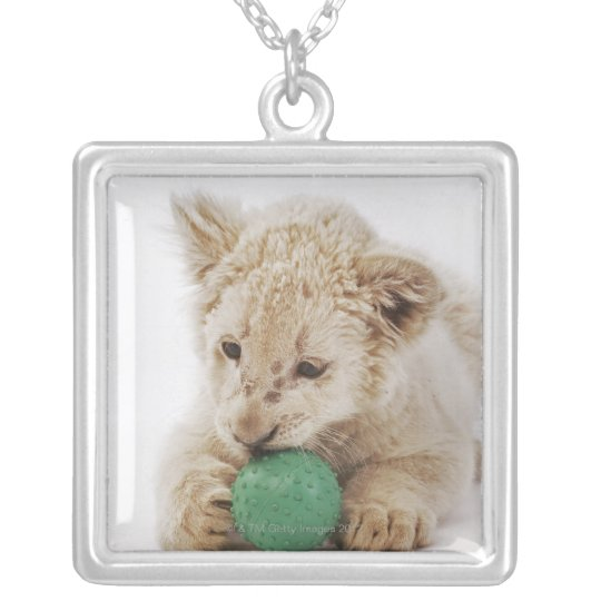 White lion cub (Panthera leo krugeri) playing Silver Plated Necklace