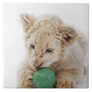 White lion cub (Panthera leo krugeri) playing Large Square Tile