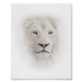 White Lion Head Mini Poster