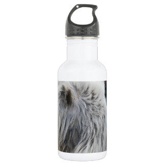 White lion in repose 18oz water bottle
