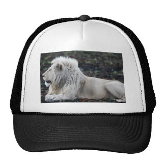 White lion in repose trucker hat