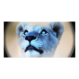 White Lion look of surprise close up Card