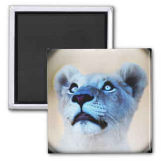 White Lion look of surprise close up Magnet