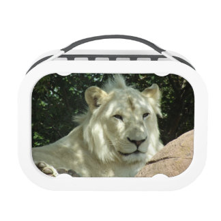White Lion Lunch Boxes