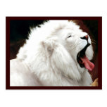 White Lion South Africa Postcard