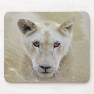 White Lion Spirit Warrior Africa Mouse Pad