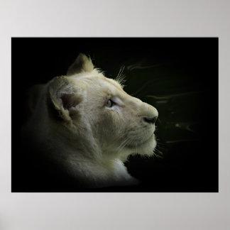 White Lion Wildlife Lion-Lover Poster