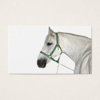 White Lipizzaner Horse Business Card