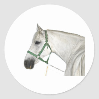 White Lipizzaner Horse Classic Round Sticker