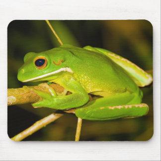 White Lipped Tree Frog Litoria Infrafrenata Mouse Pad